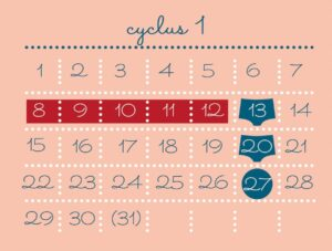 cyclus 1